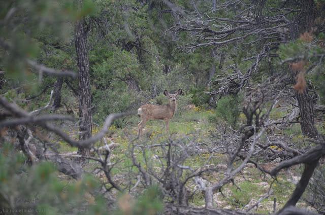 Ciervo comiendo en el Parque Nacional