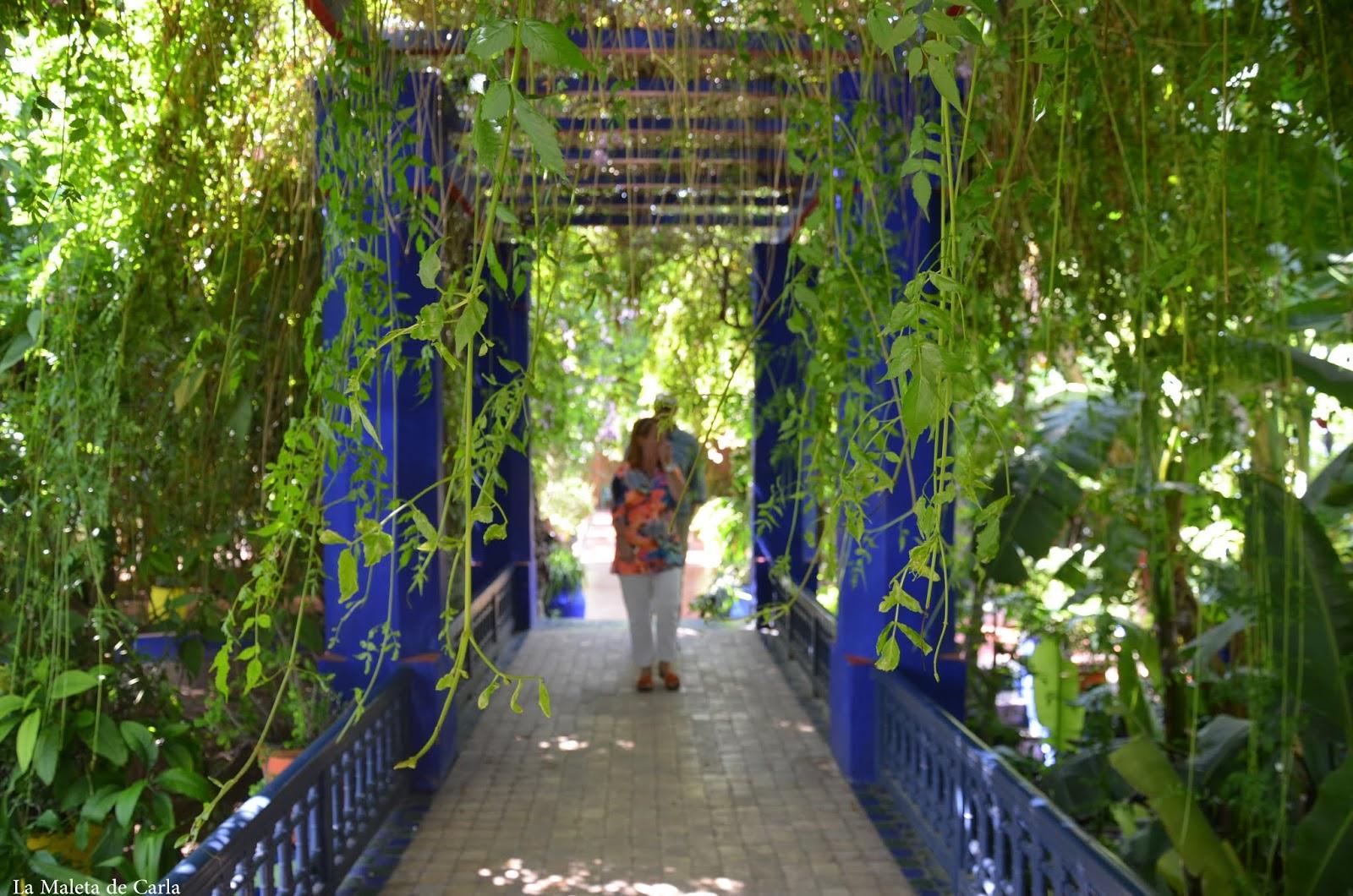 Qué hacer en Marrakech: jardines Majorelle