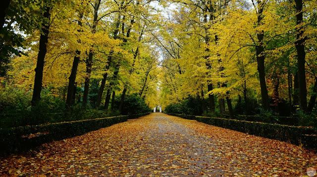 Paseo con árboles de hojas amarillas a ambos lados. El suelo cubierto de hojas.