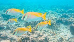 Cinco peces de colores