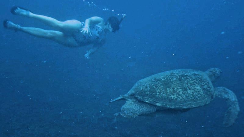 Nadando con una tortuga