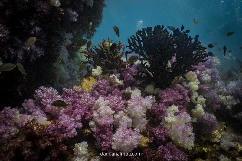 Bucear en Koh Lipe: fondo marino