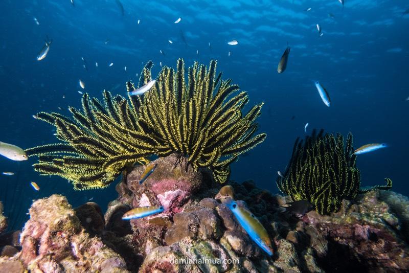 Bucear en Koh Lipe: corales de colores