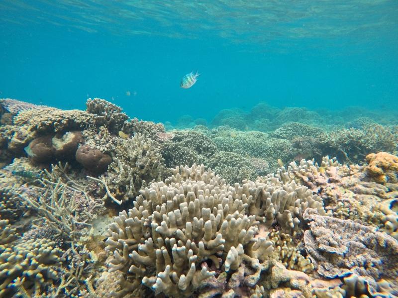 Snorkel en Kanawa Island