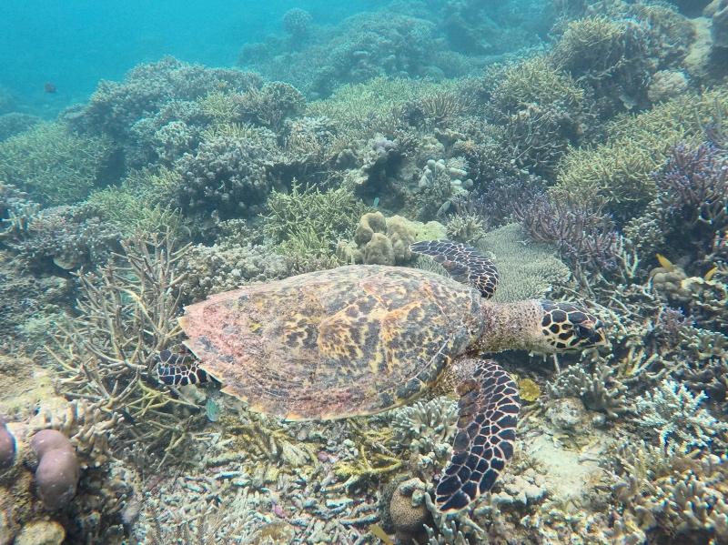 Snorkel con una tortuga