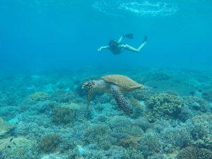 Snorkel con una tortuga en Pink Beach