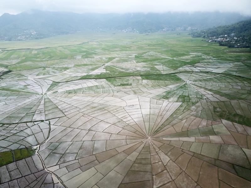 Ruta por la isla de Flores: arrozales de Ruteng
