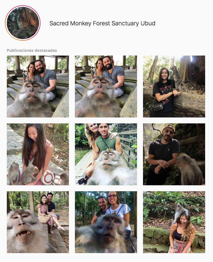 Una captura de pantalla de publicaciones sobre el Monkey Forest en la que la mayoría son selfies con monos.