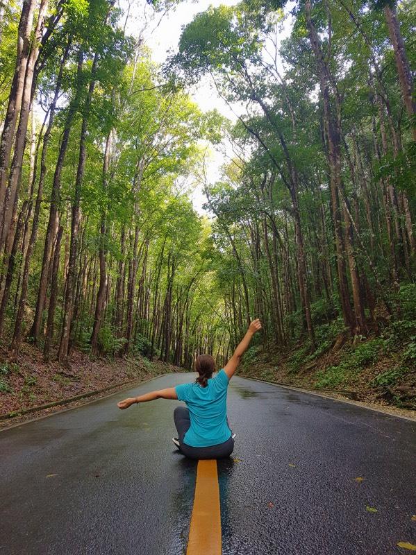 Bohol en 3 días: Man Made Forest