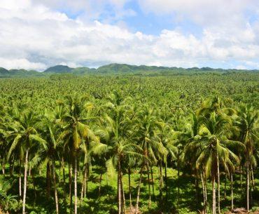 Guía para viajar a Siargao: mar de palmeras
