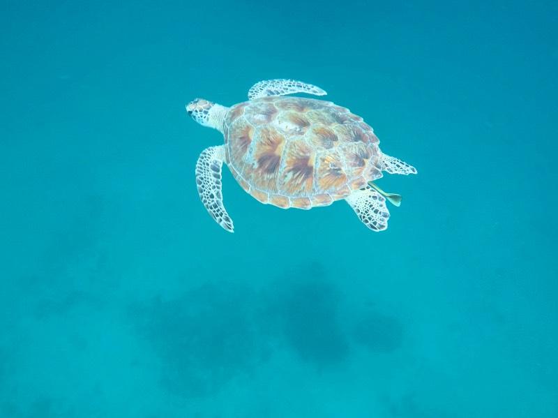Qué hacer en Port Barton: nadar con tortugas en libertad