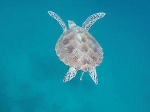 20 cosas que hacer en Filipinas: ver tortugas