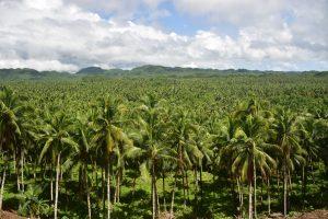 20 cosas que hacer en Filipinas