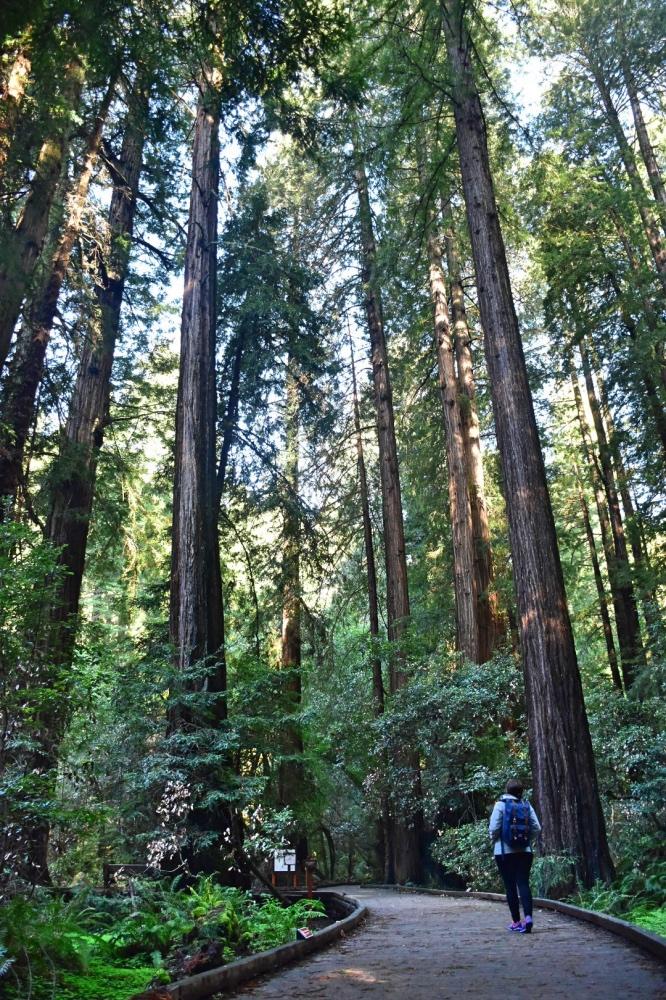 Que hacer en San Francisco: Muir Woods