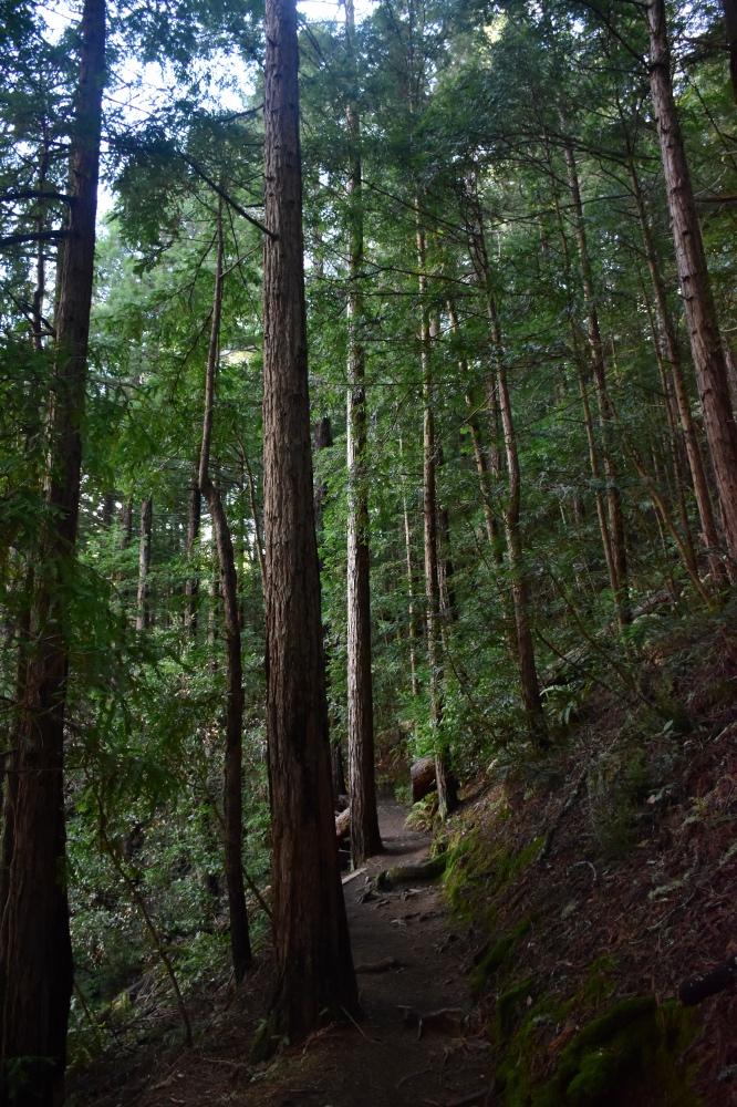 excursión de un día a Muir Woods desde San Francisco
