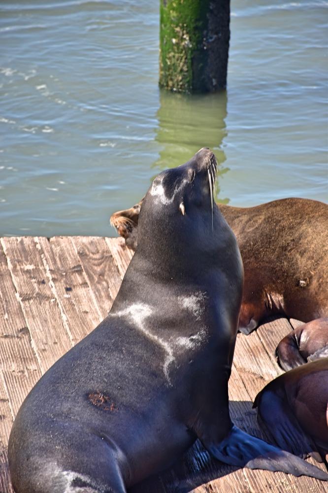 San Francisco en 3 días: Pier 39