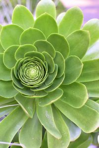 San Francisco en 3 días: Jardín Botánico