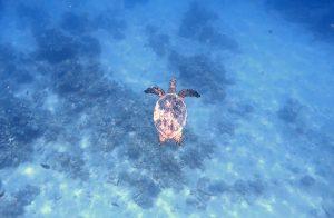 Una de las cosas que hacer en Marsa Alam es hacer snorkel