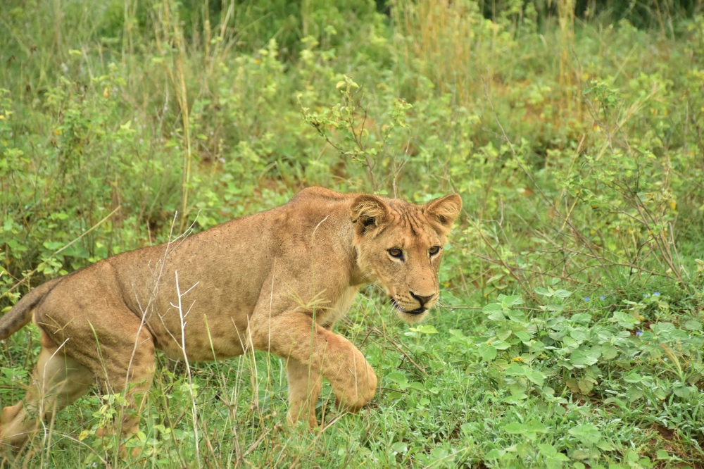 Leona en Murchison Falls durante un viaje de 12 días a Uganda