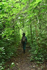 Ranger caminando por el bosque de Budongo en un viaje de 12 días a Uganda