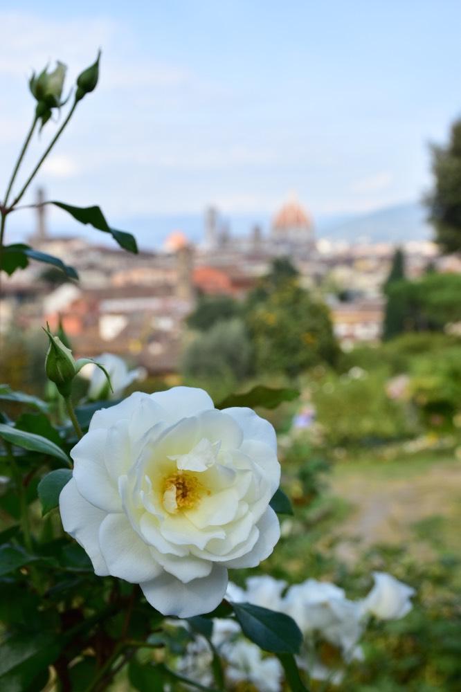 Jardín de las rosas en Florencia