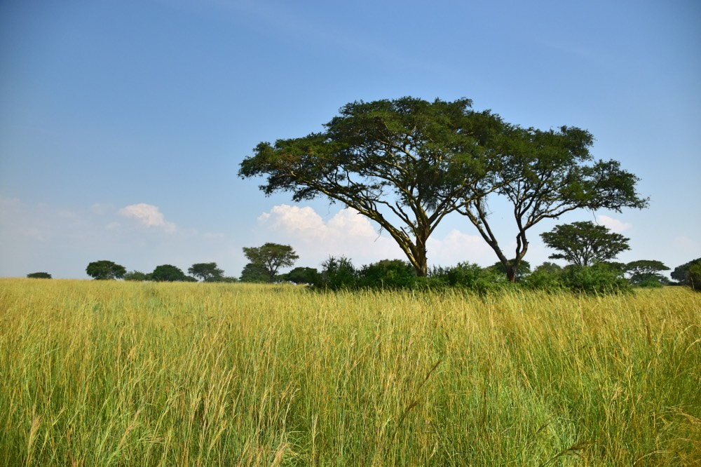 Visitar el Parque Nacional Queen Elizabeth: sabana africana