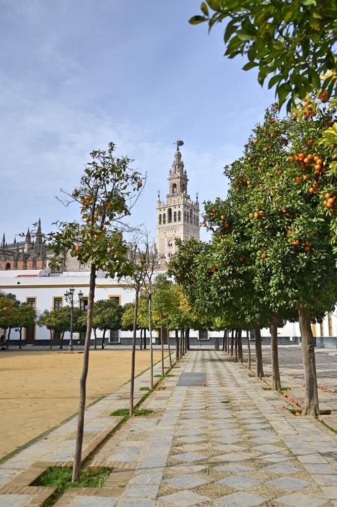 Qué hacer en Sevilla: Plaza con naranjos y, al fondo, la Giralda.